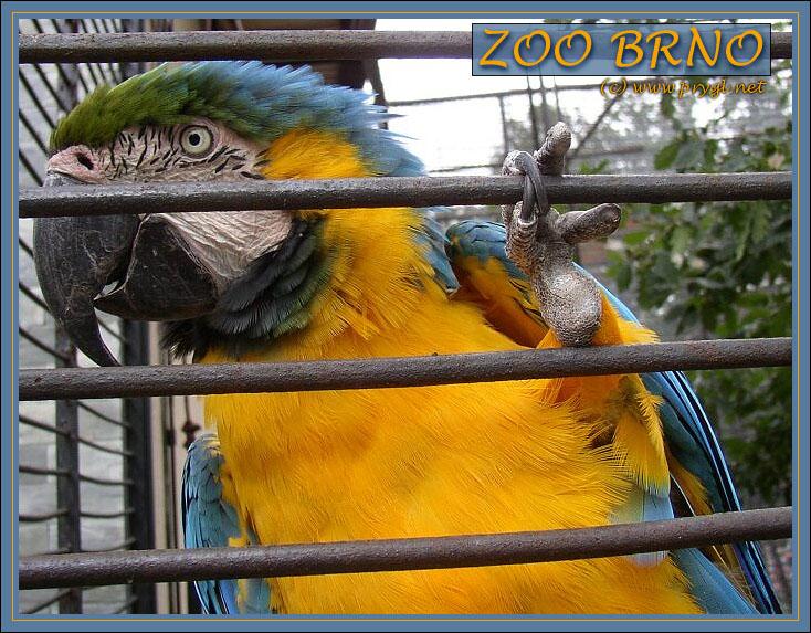 http://www.prygl.net/foto/zoo3_v.jpg